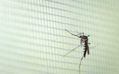 """Club Leaders Closing Comments: """"Life Lessons from the Mosquito"""""""
